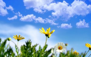 735826__wallpaper-sky-blue-flowers-spring-monitor-wallpapers_p